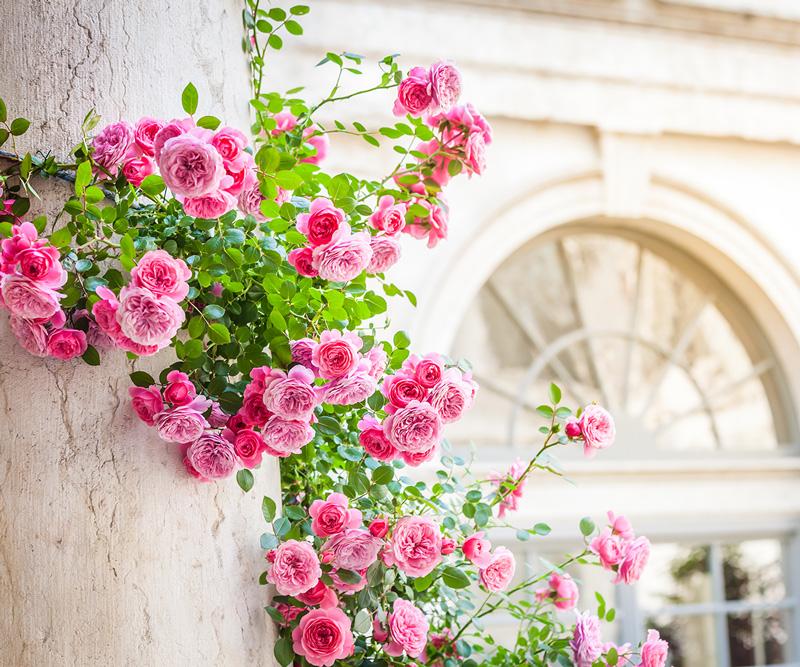 Foto di restauro colonnato fiorito per giardino storico
