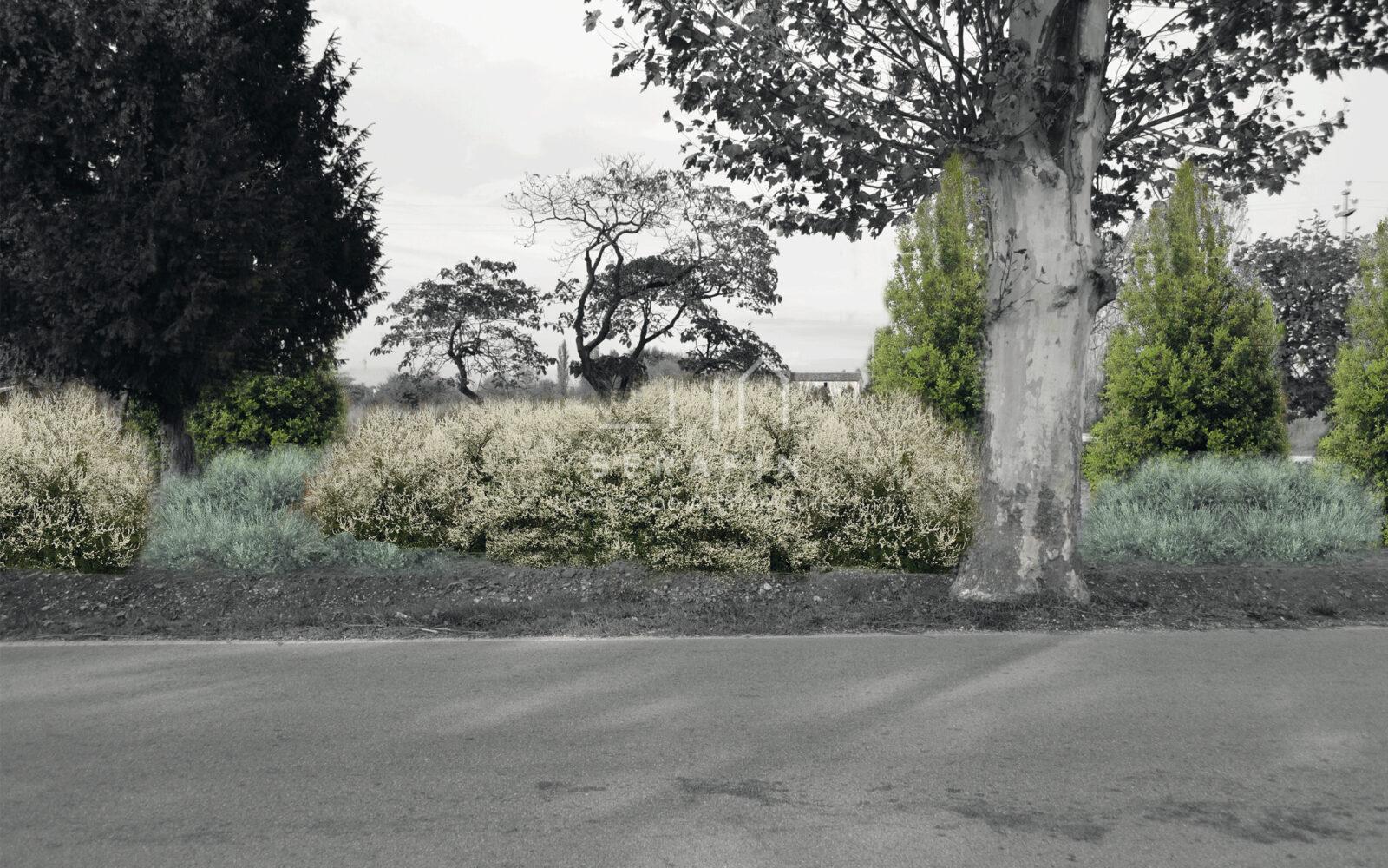 progetto ingresso abitazione privata con siepe campestre - 3