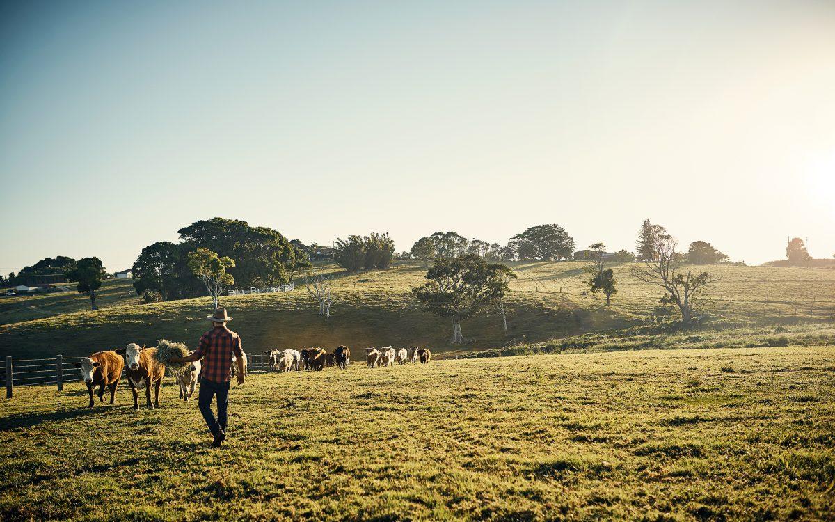 progettazione giardini di campagna e di aziende agricole a treviso, verona e venezia