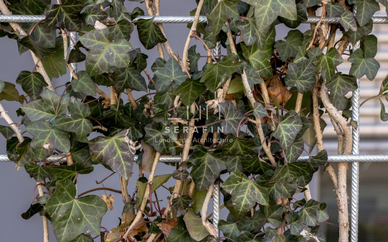 progetto giardino verticale aziendale con aiuole sede Cofiloc
