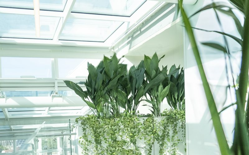 immagine piante di una serra indoor