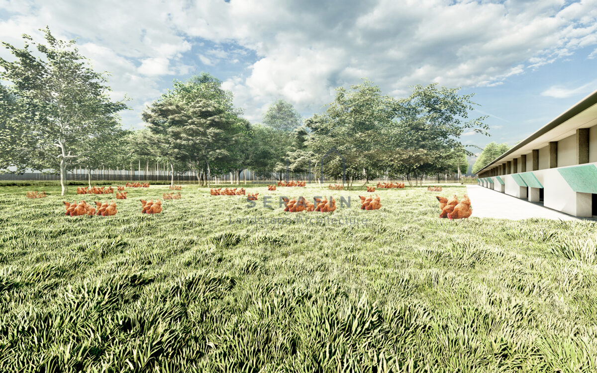 image of a landscape project of an organic chicken farm 7