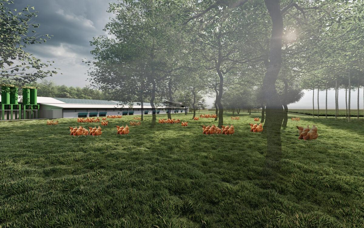 immagine progetto paesaggistico allevamento biologico avicolo